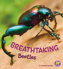 Breathtaking Beetles