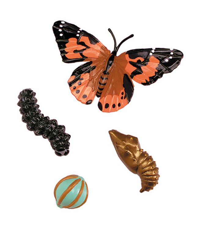 Life Cycle Stages, Butterfly