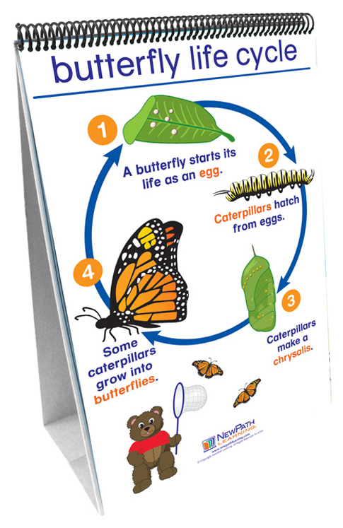 All About Animals Science Readiness - Flip Charts