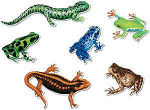 Pop-Out Amphibians - 2 Sided