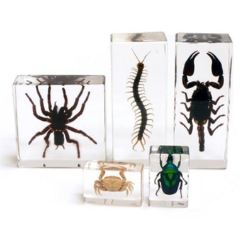 Biology for Kids, Arthropod Collection