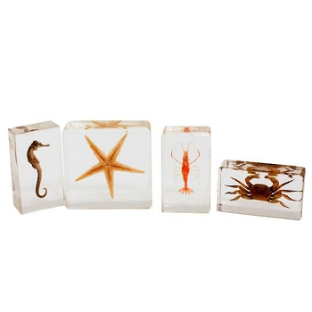 Biology for Kids, Sea Life Specimen Set