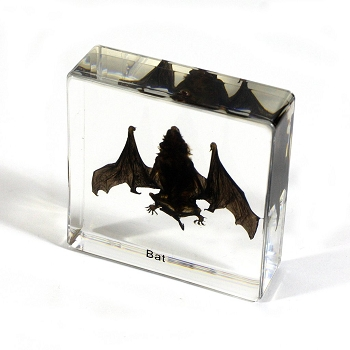 Bat, Small Specimen Block