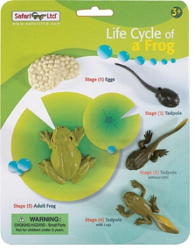 Safari LTD Hands On Learning Tool - Life Cycle of a Frog