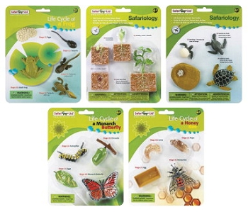 Safari Ltd Complete Set Lifecycle Models - Set of 5