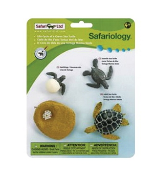 Safari Ltd. Models Life Cycle Of A Green Sea Turtle