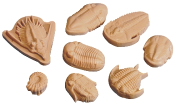 Sax Fossil Replica Nature Impression Set - Set of 8