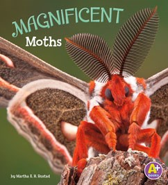Magnificent Moths