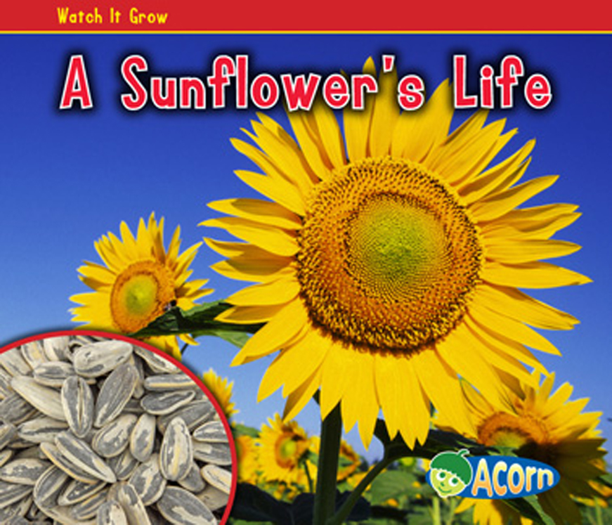 A Sunflower's Life
