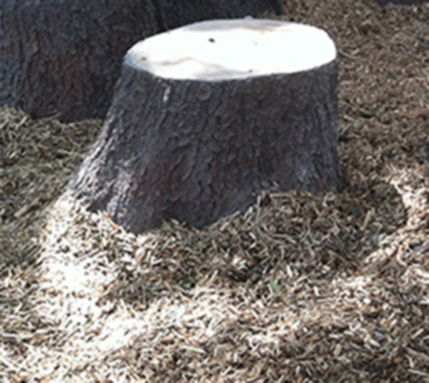 Flared Stump