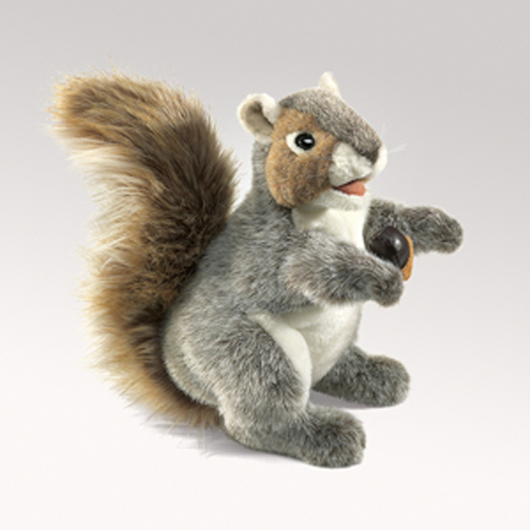 Squirrel, Gray