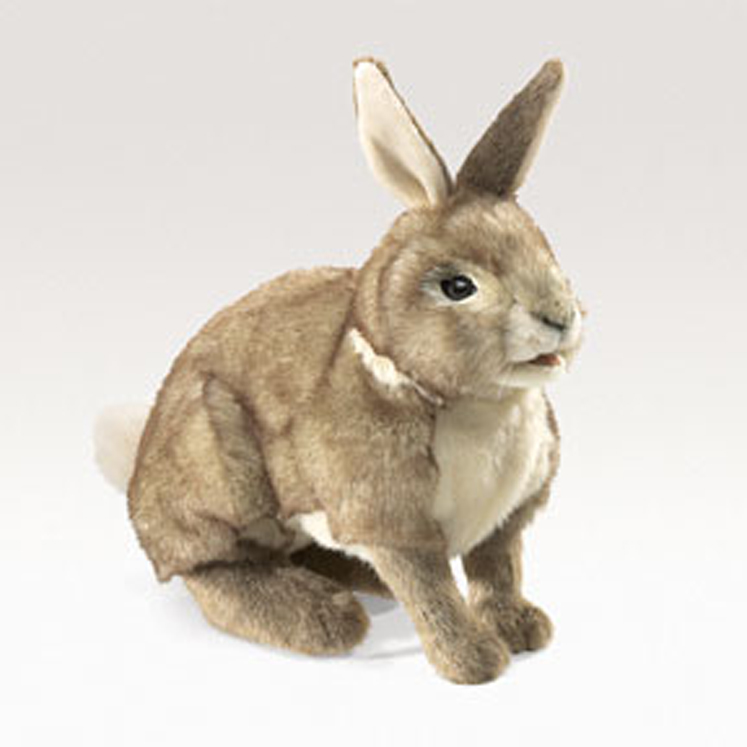 Rabbit, Cottontail