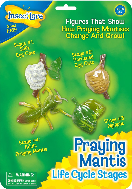 Life Cycle Stages, Mantis - Set of 4