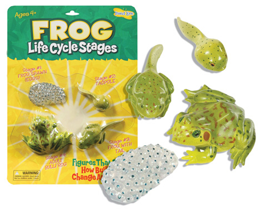 Life Cycle Stages, Frog