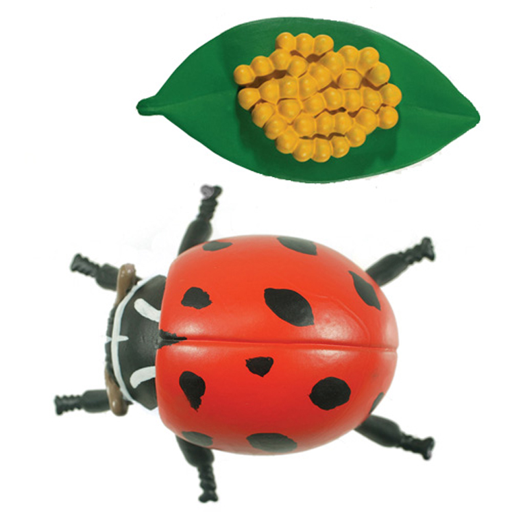 Life Cycle Stages, Ladybug