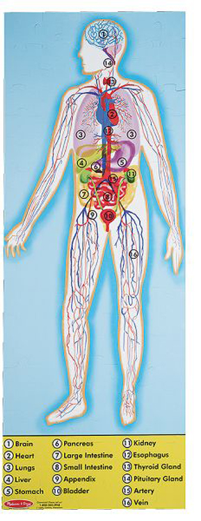 Human Body Floor Puzzle - 100 Pieces
