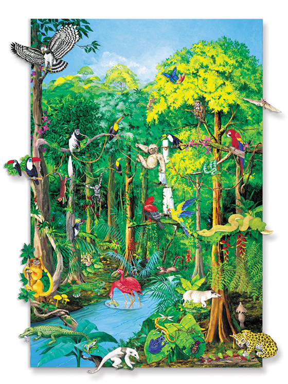 Rain Forest Animals with Mounted Board