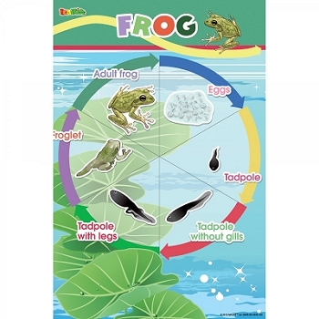 Frog Magnetic Wall Sticker