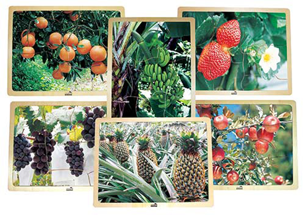 Growing Up Green Healthy Eating Fruit Puzzles