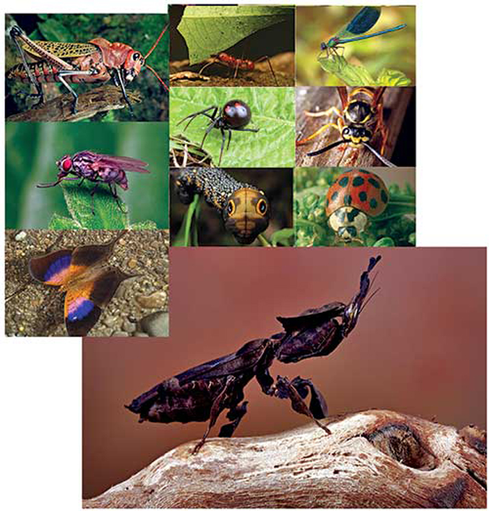 Bug-Tastic Posters, 11'' x 17'' - Set of 16