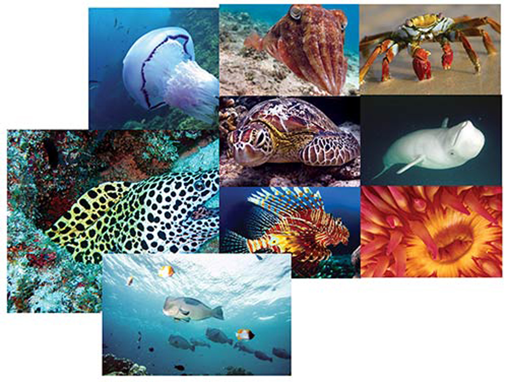 Ocean Discovery Posters