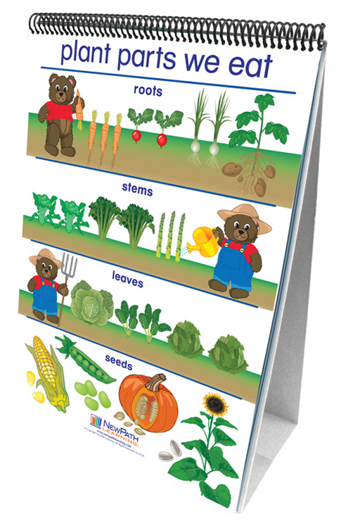 All About Plants Science - Flip Charts