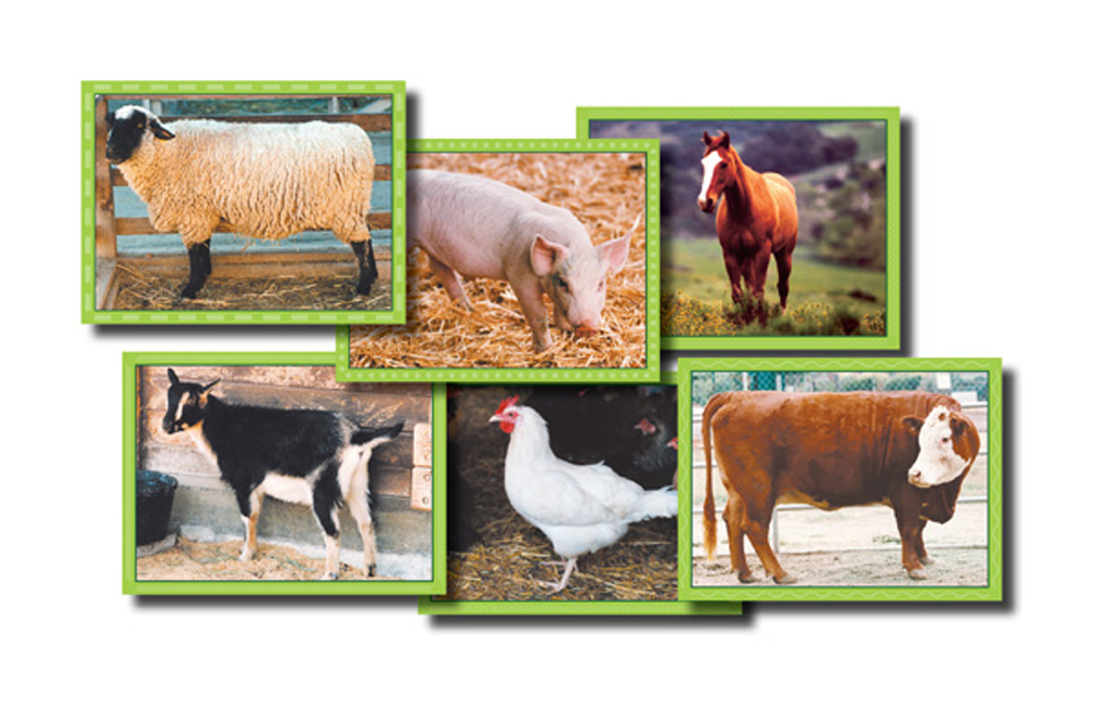 Farm Animals - Cube Puzzles