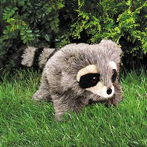 Raccoon, Baby