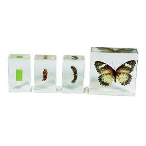 Biology for Kids, Butterfly Life Cycle
